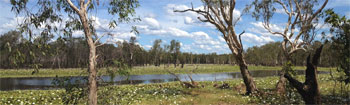 Campground Sandy Billabong